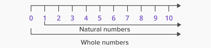 Whole Numbers 1