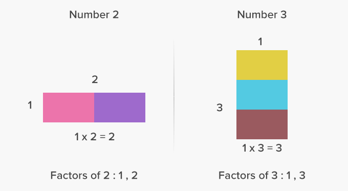 Prime numbers two factors one and the number itself