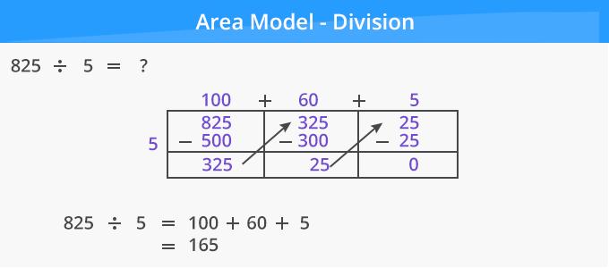 Area Model Division 1